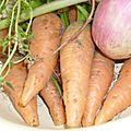 Poêlée de carottes et navets.