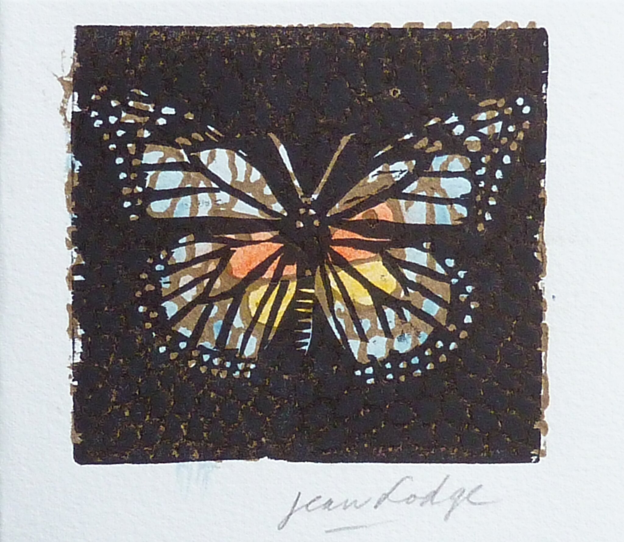 Jean Lodge , papillon, xylographie en couleurs -P1270991