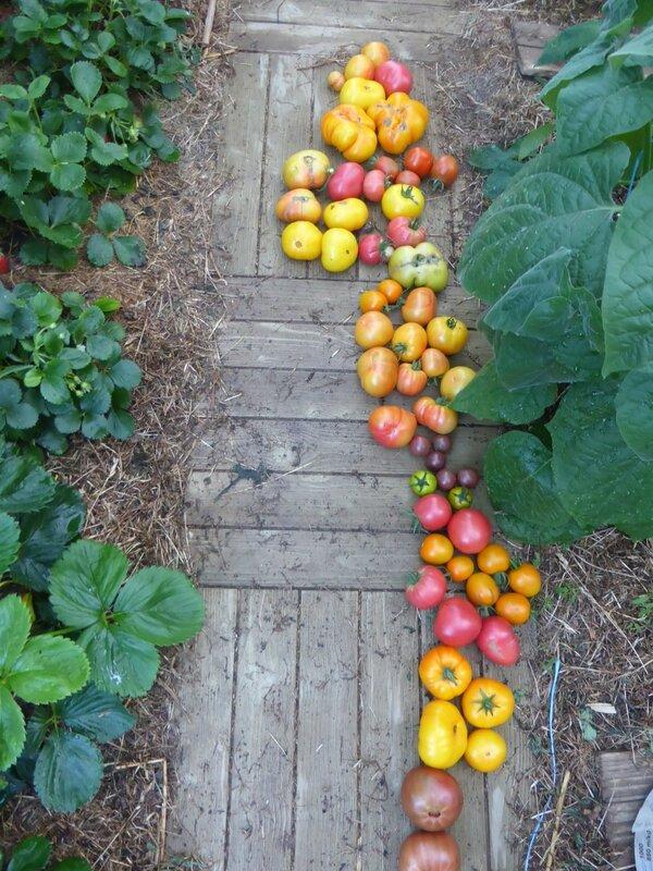 7-tomates (1)