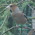 Les oiseaux au jardin de ville n°1