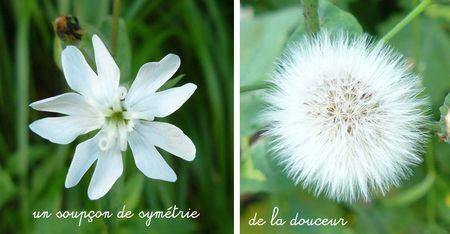 fleurs_blanches_mai_2009_copie