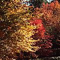 L automne au petit jard