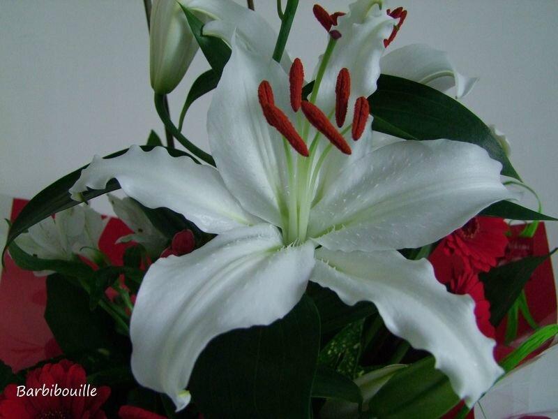 bouquetFév14