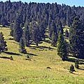 Les landes de pins à crochets.
