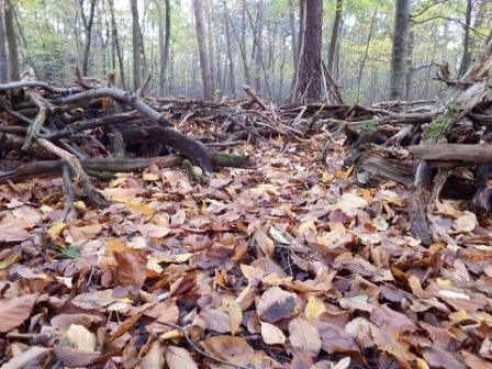 forest-floor-225248_960_720