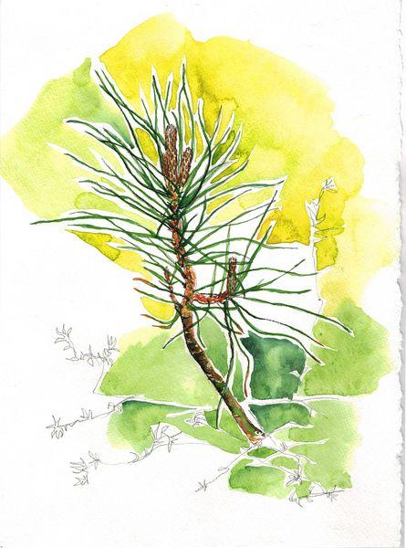 faire part baby pine