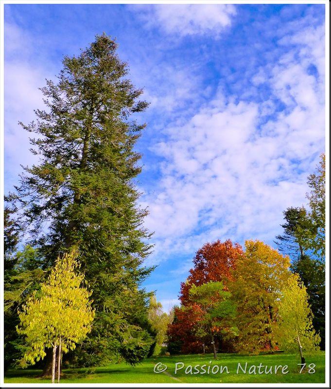 Arboretum de Chèvreloup (23)
