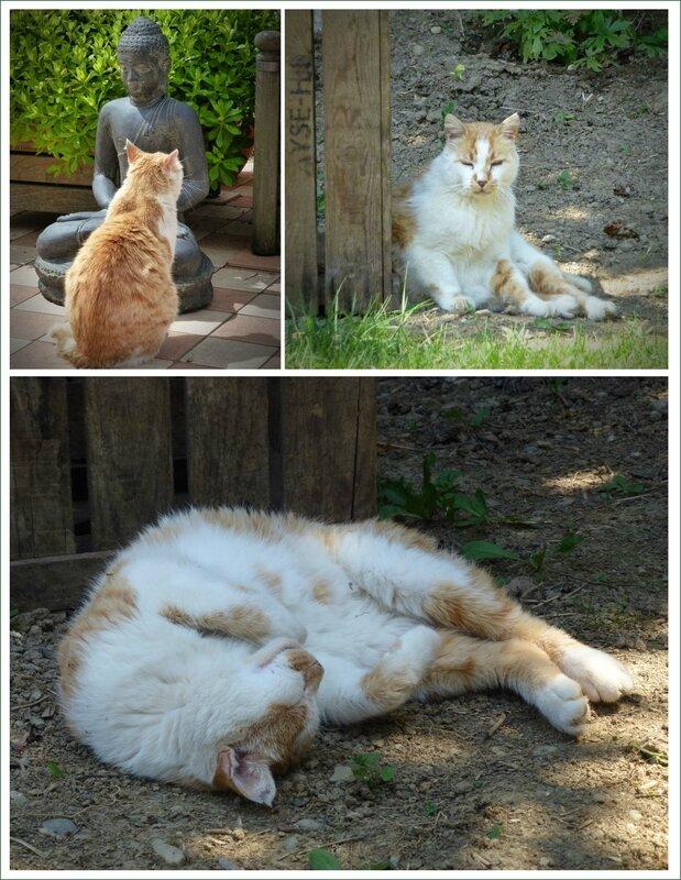 2-Garfield