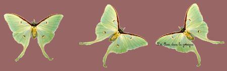 Papillons_vert