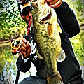 Bass Mister D