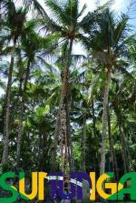 sununga coco