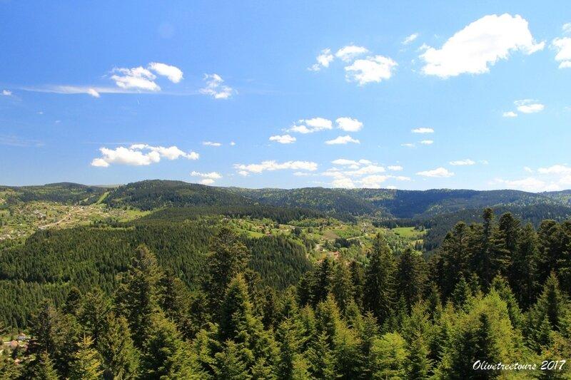 Forêt vosgienne / Vosges forest