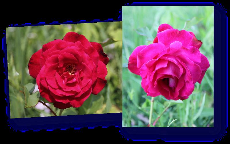 rosier empreinte