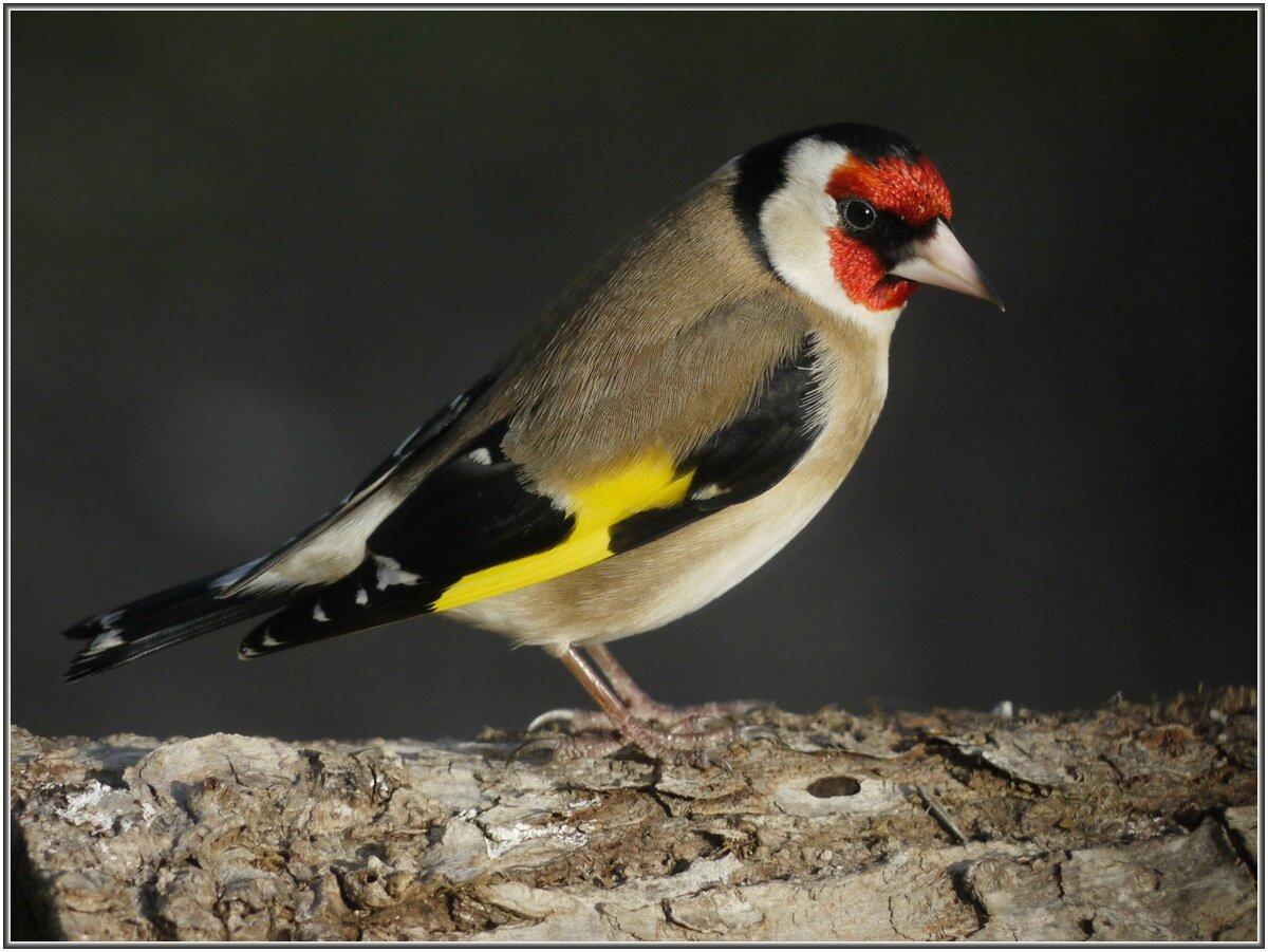 Les oiseaux du jardin en hiver le blog de val riane for Oiseaux de nos jardins belgique