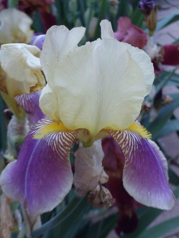 jardin et fleurs 011