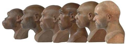 homo-sapiens-06_93334_1_naturalMuseum1