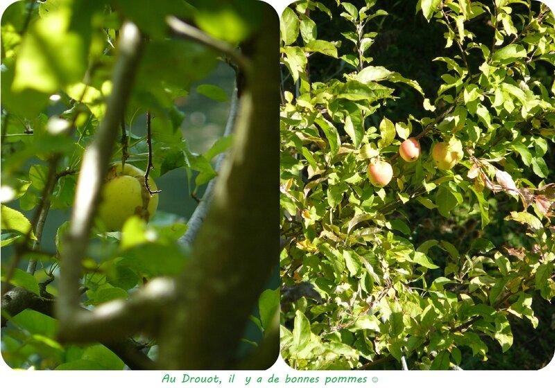 Quartier Drouot - Bonnes pommes