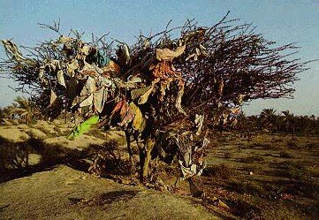 arbre___voeux_iranien