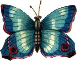 big-blue-butterfly