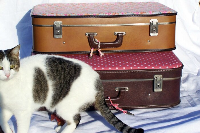 Cat et valises