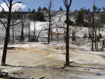 17_Jun_04___Yellowstone__Mammoth_Hot_Springs_terraces_7