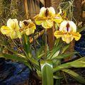 Expo internationale d'orchidées à Thoune CH