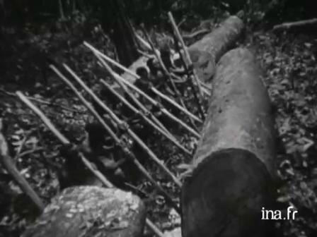 forêt, sida et colonialisme
