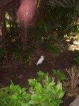 Assouan___jardin_botanique_2