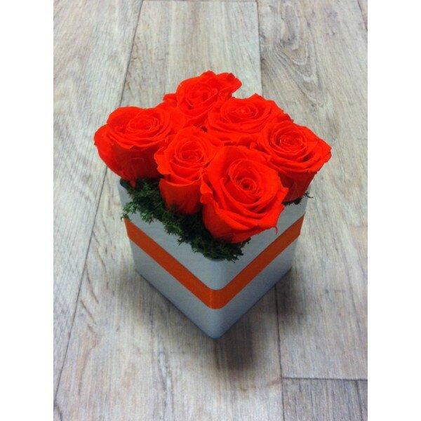 le-kube-orange
