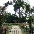 blenheim roses