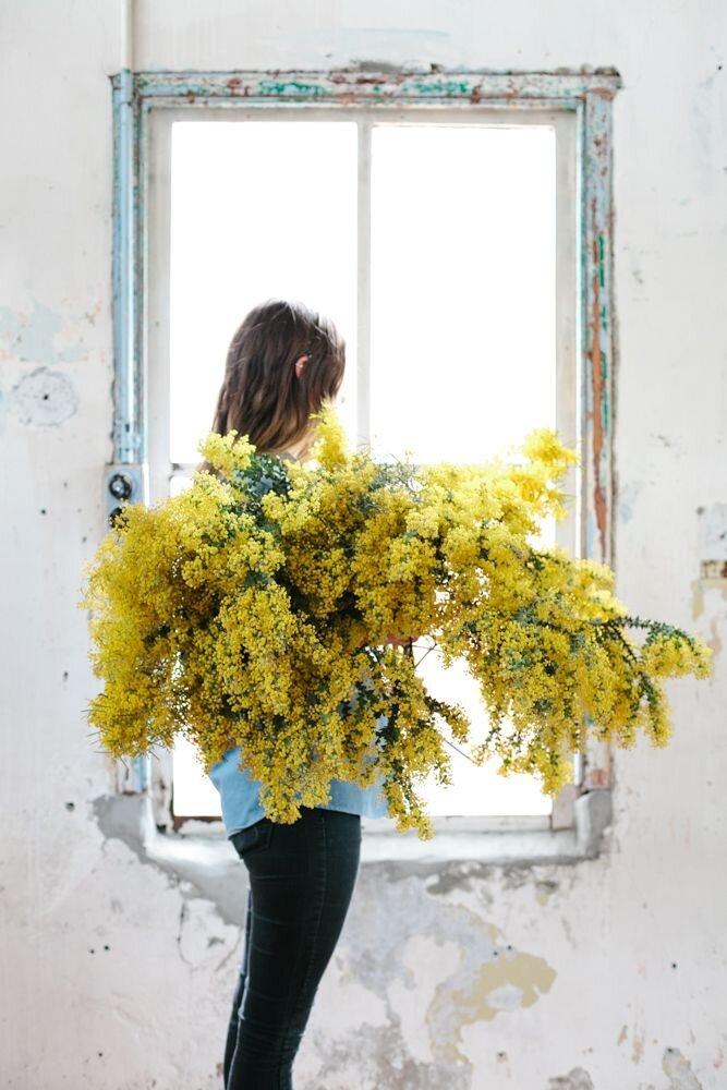 Le mimosa, le rayon de soleil au coeur de l'hiver (astuces conservation d'un bouquet)
