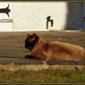 Chat marron sur terrasse