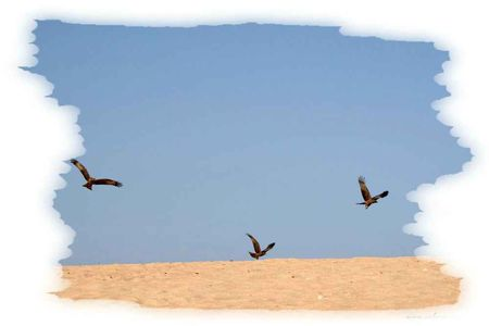 SeckasystemeBalai_Oiseaux_rs