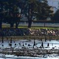 Marée basse 19 03 2011 018