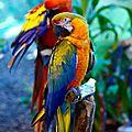 oiseaux perroquet_nf5ob3vb4E1r0f8s4o1_1280