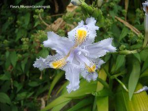 fleur_iris_bleu