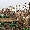 La cloture en bois du jardin des femmes - Février 2012