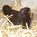 Les petits lapins grandissent