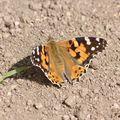 2009 07 10 Un papillon posé par terre