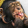 Le singe et le menuisier.