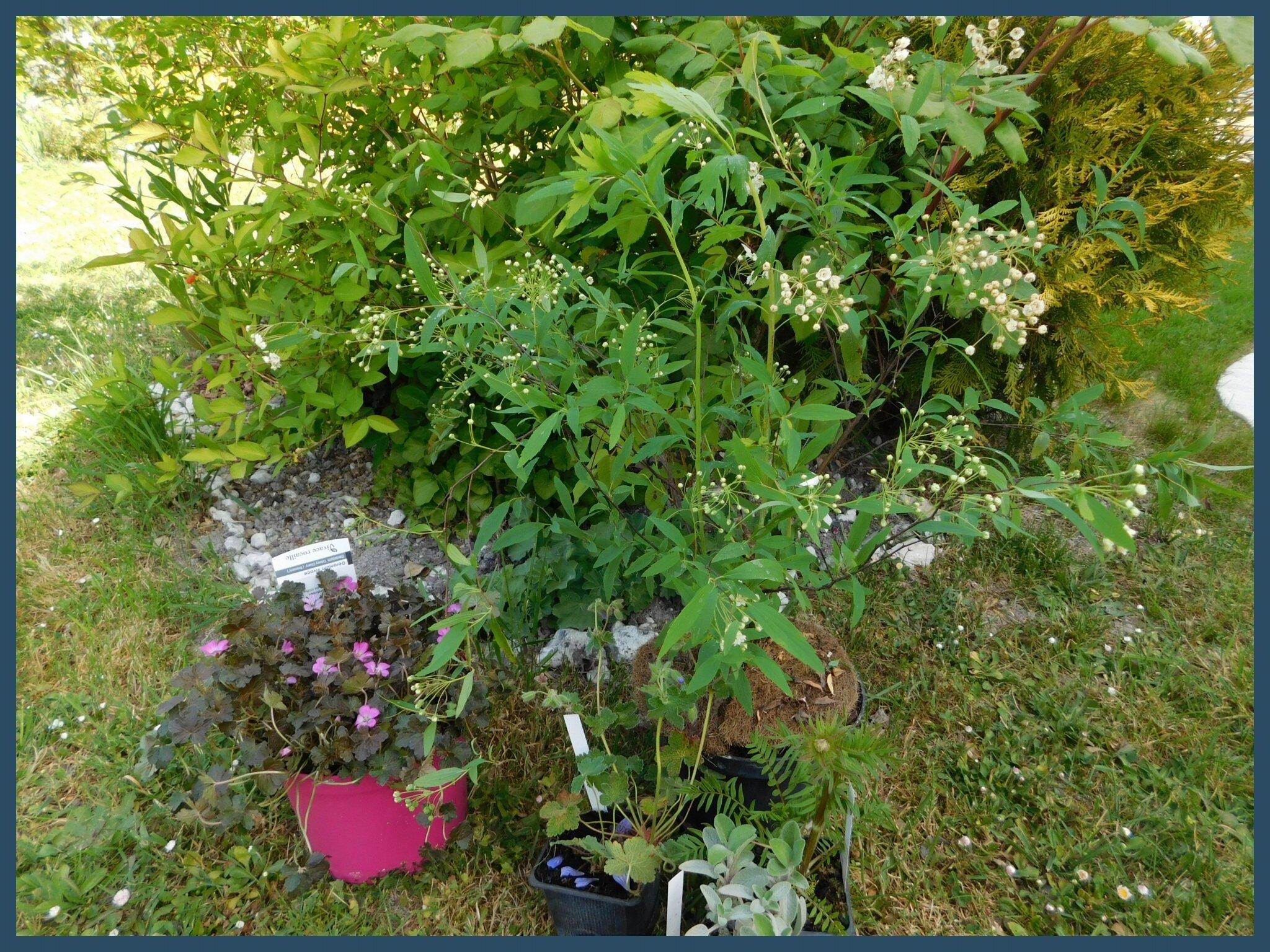 Jardin et plantes l 39 oeil et la main for Agrementer un jardin