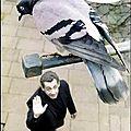 Le risque que prend le candidat sarkozy à nous considérer comme des pigeons !