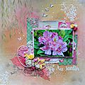 Page : rhododendron du jardin