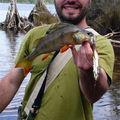 La pêche du jour : de belles perches…