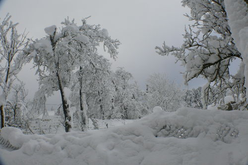 2008 12 18 Neige vu sur le jardin