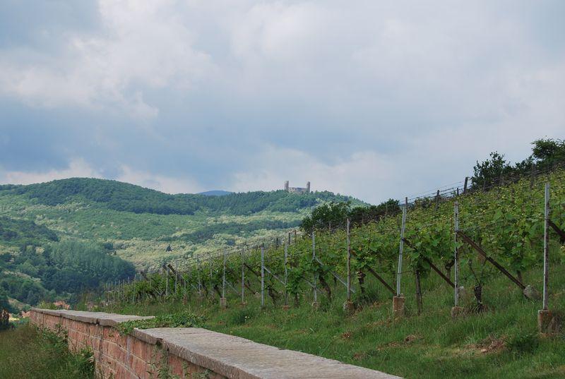 Alsace 360 ° Tour