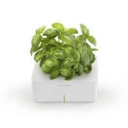 basil___click_and_grow