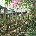 Sur le Mékong - serres
