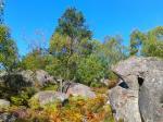 Forêt de Fontainebleau 4