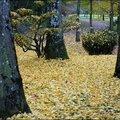 2011_11_15-POM-P1060306